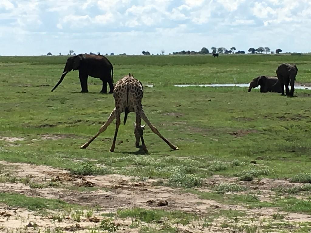 IMG 37191 1024x768 - Our Trip to Botswana