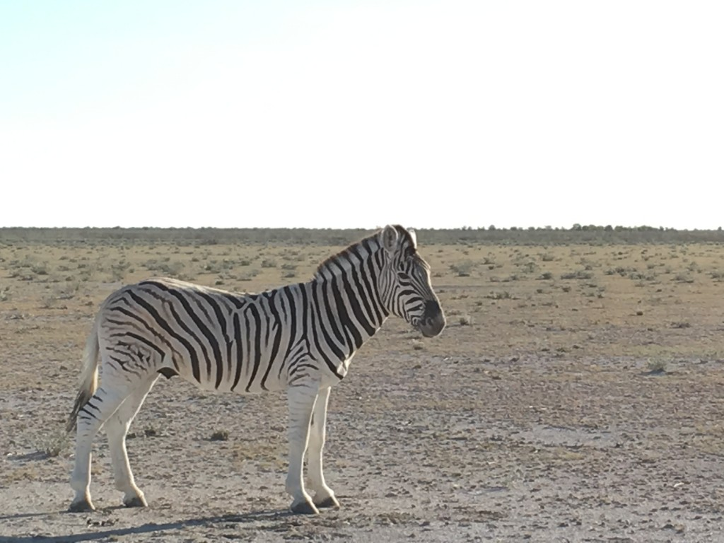 IMG 4051 1024x768 - Our Trip to Namibia