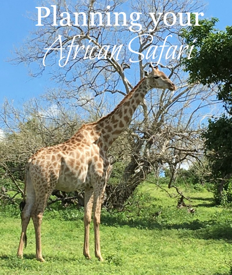 Planning your African Safari - Our Trip to Botswana