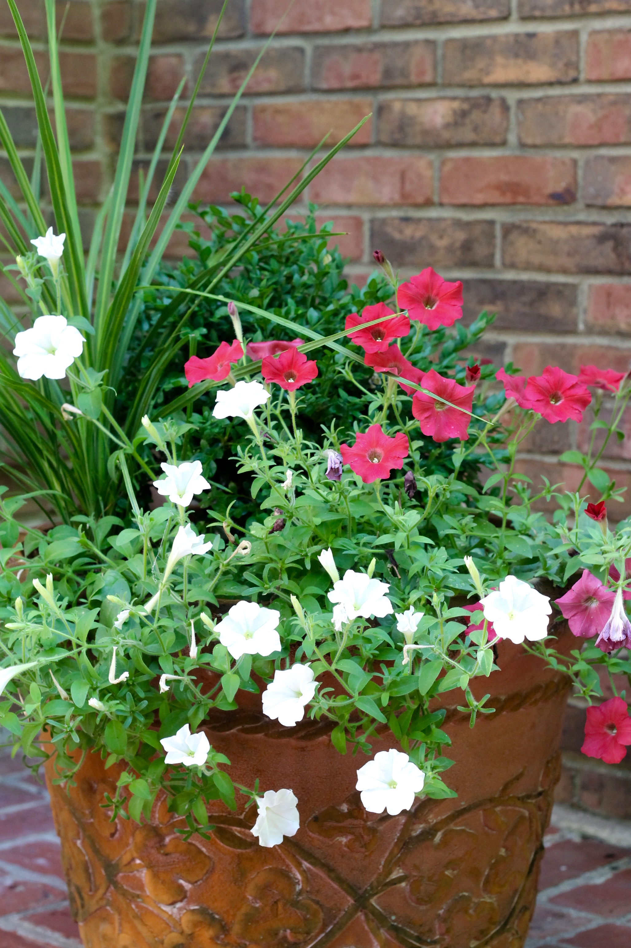 Wave petunias ready for July 4 - The 2 Seasons