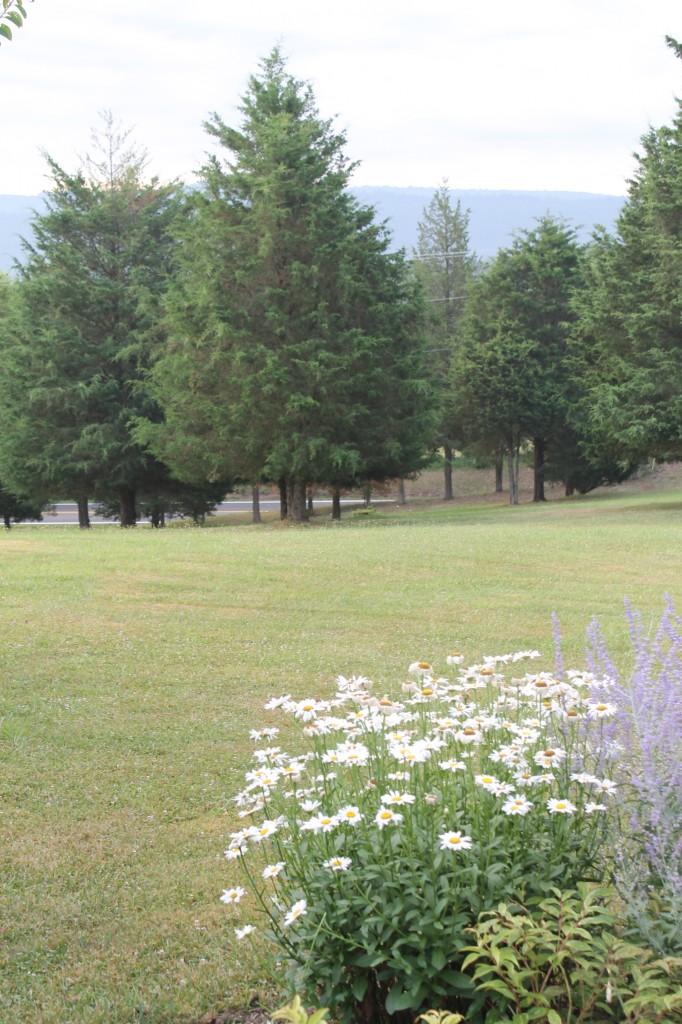 IMG 2953 e1470401497189 682x1024 - Grandma's Country Garden, 2016