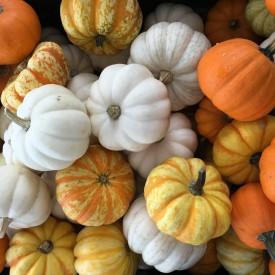 Fall recipes - The 2 Seasons