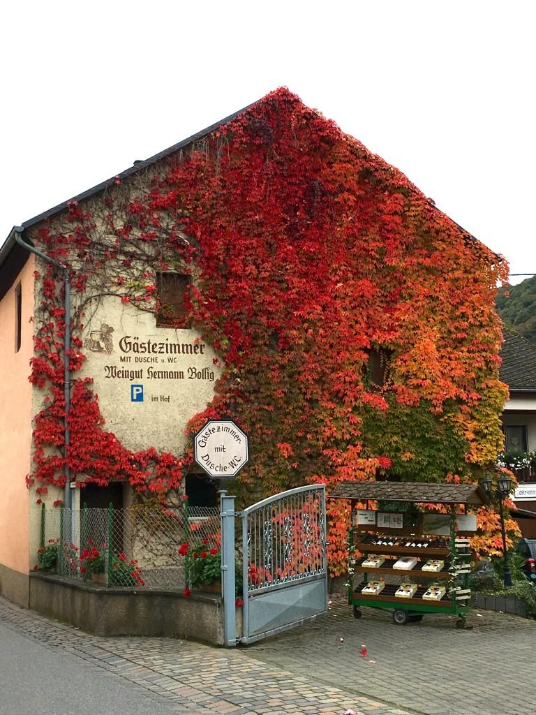Biking in Germany - The 2 Seasons