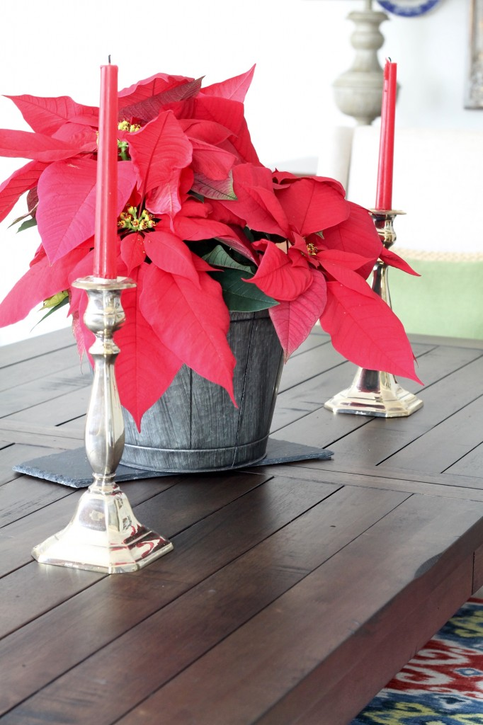 Christmas poinsettia - The 2 Seasons
