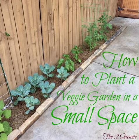 How to Plant a Veggie Garden in a Small Space - The 2 Seasons