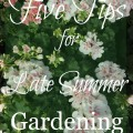 Gardening Tips 120x120 - Summer Courtyard Plans