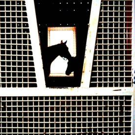 Horse farm - The 2 Seasons