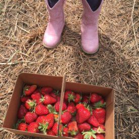 IMG 0144 e1525721162892 275x275 - Strawberry Freezer Jam