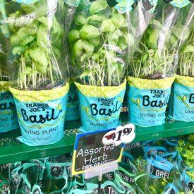 Basil herb - The 2 Seasons