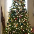 IMG 3102 120x120 - My First Fake Tree was a Fail