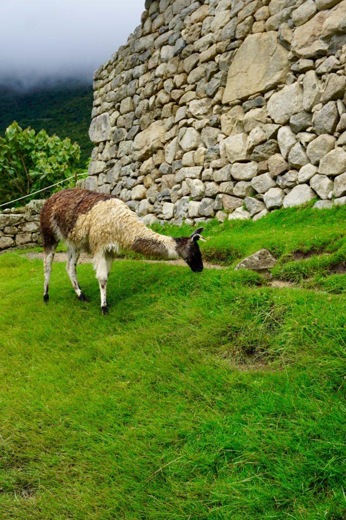 DSC01945 681x1024 - Our Trip to Machu Picchu