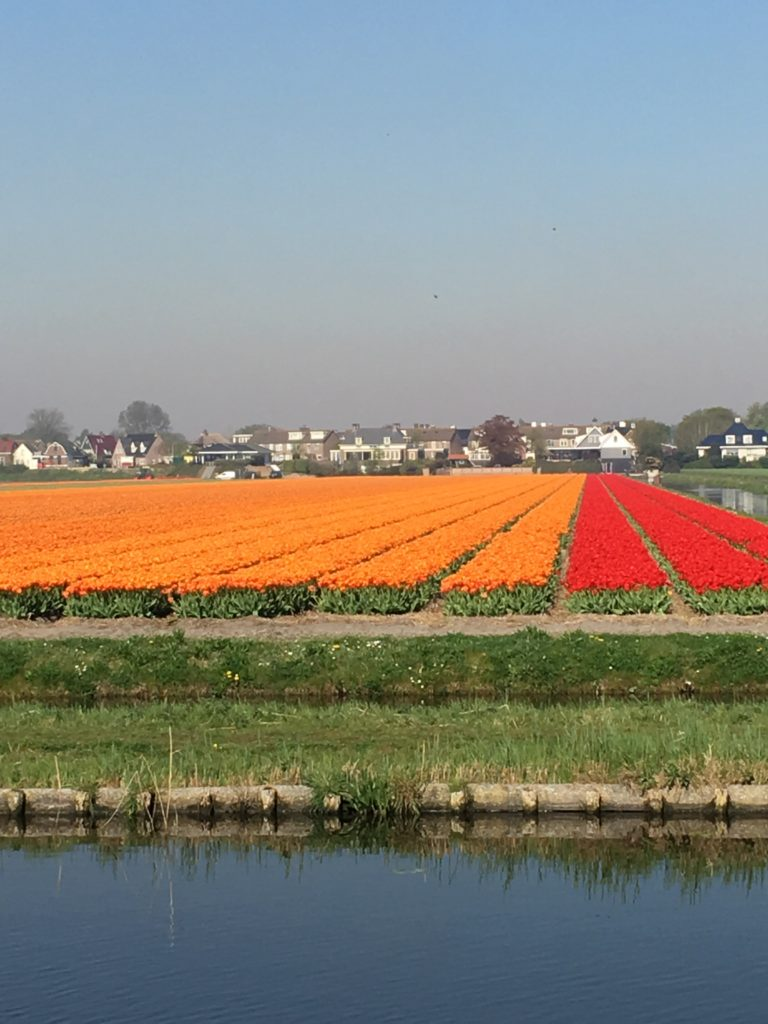 Tulip Tour The Netherlands - The 2 Seasons
