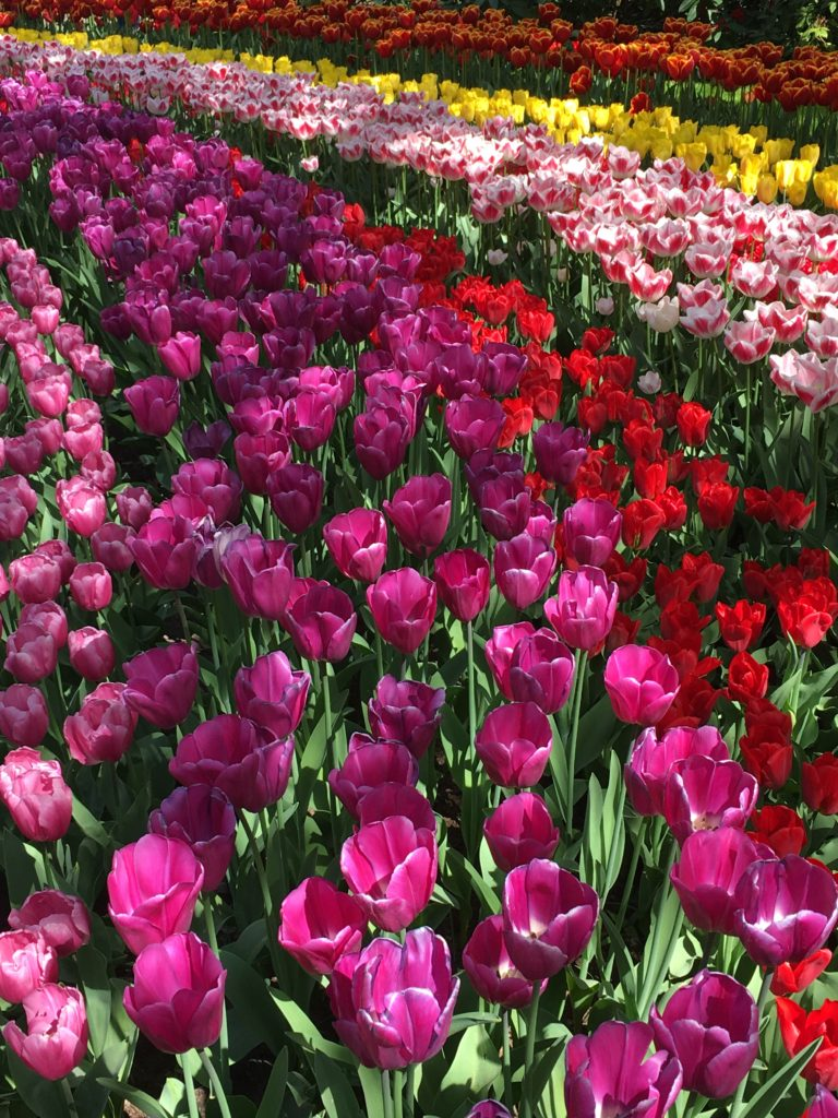 Tulip Tour - The Netherlands - the 2 Seasons