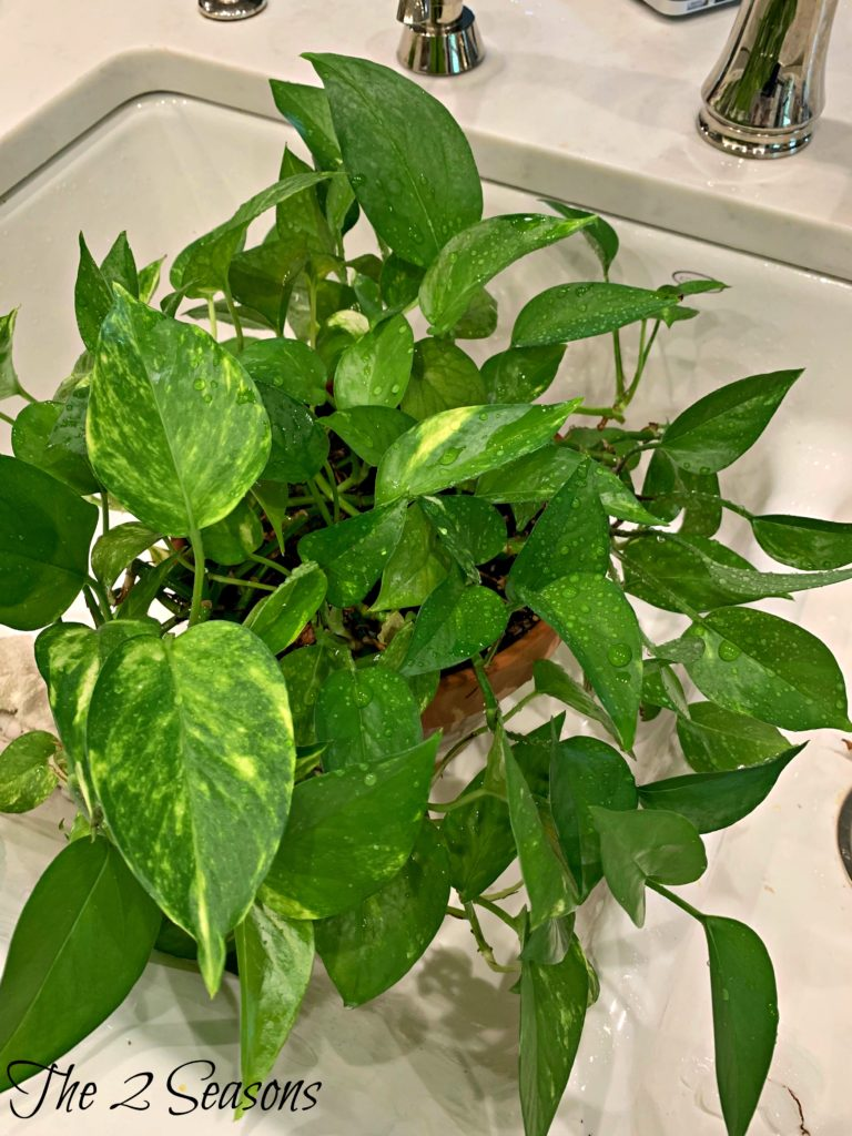 Plant 1 768x1024 - How to Get Free House Plants