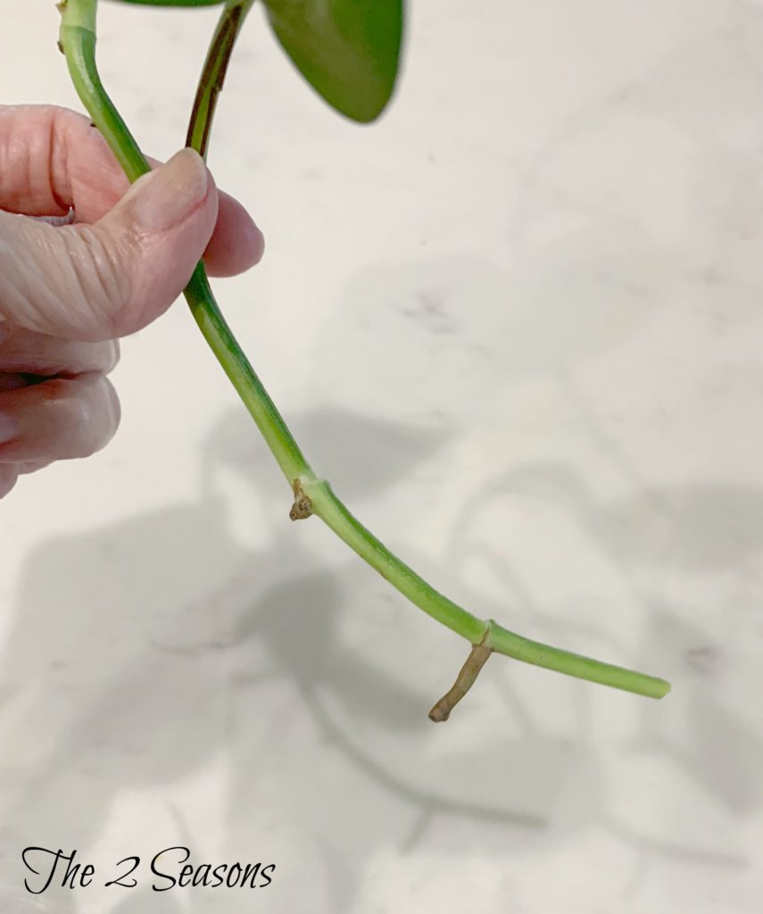 Plant 4 855x1024 - How to Get Free House Plants